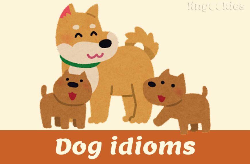 Dog idioms in Italian
